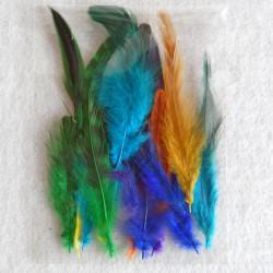 Federn gemischte Farben